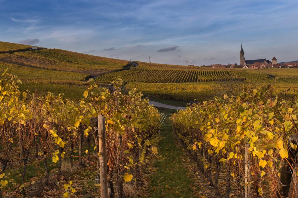 le-vignoble alsacien-vins-alsace