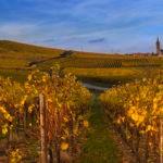 vignoble-alsace-automne