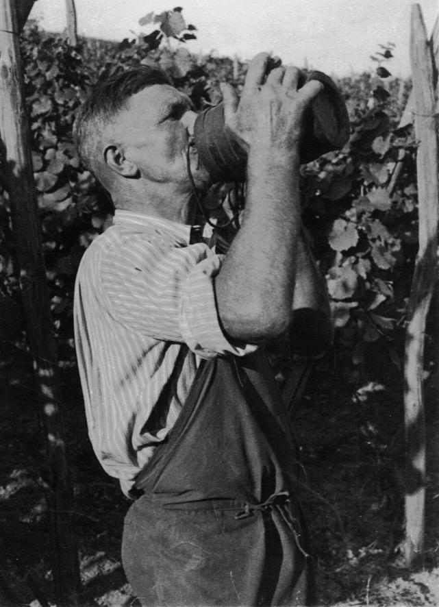 domaine-dirringer-alsace-famille-vins