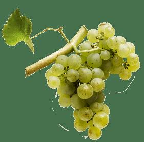 sylvaner-vins-7-cepages-alsaciens-raisins